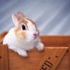 Чего ждать от года кролика