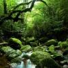 Как добыть воду в лесу