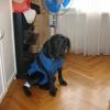 Как поставить капельницу собаке