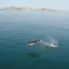 Как поехать на черное море