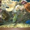 Как промыть грунт для аквариума
