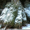 Как сохранить новогоднюю елку