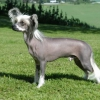 Как ухаживать за лысой собакой
