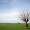 Как заключить договор аренды на земельный участок