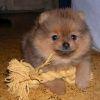 Породы маленьких собак
